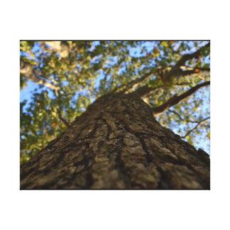 Impresión de la lona de la corteza de árbol