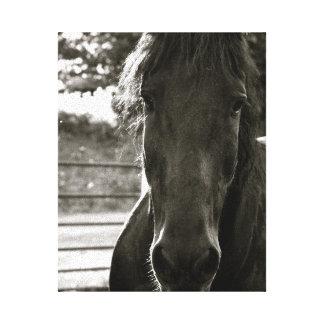 Impresión de la lona de la foto del caballo de Fre Lona Envuelta Para Galerías