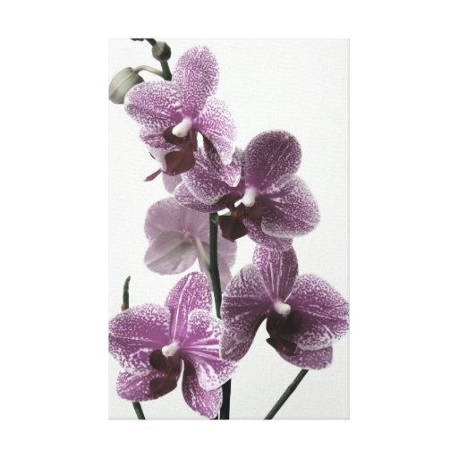 Impresión de la lona de la orquídea lona envuelta para galerías