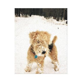 Impresión de la lona de Lakeland Terrier