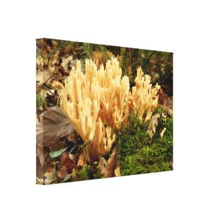 Impresión de la lona de los hongos del stricta de