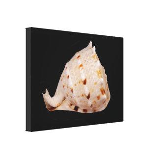 Impresión de la lona de Shell de la concha