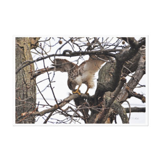 impresión de la lona del halcón de la Rojo-cola