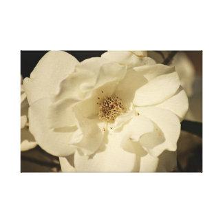 Impresión de la lona del rosa blanco