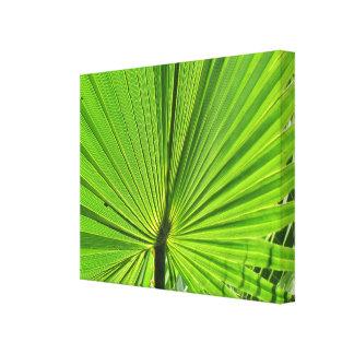 Impresión de la lona - fronda de la palma
