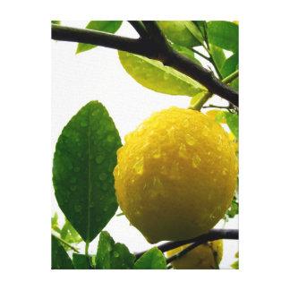 Impresión de la lona - limón en la lluvia
