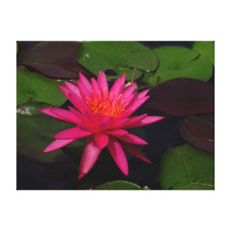 Impresión de la lona - lirio de agua rosado