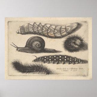 Impresión de la naturaleza del insecto del caracol