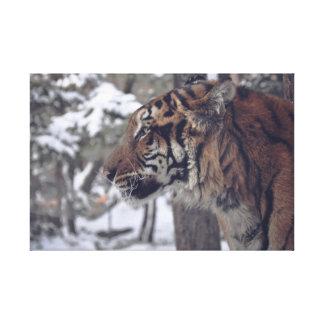 Impresión de la pared de la lona del tigre