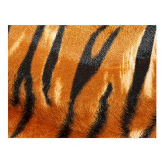 Impresión de las rayas del tigre del safari postal