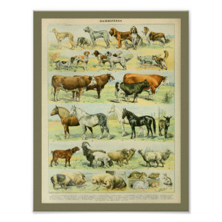 Impresión de los animales del campo del color del