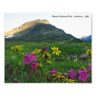 Impresión de los Wildflowers 8x10 del Parque Foto