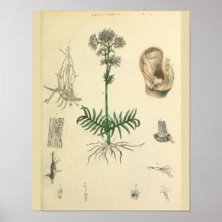 Impresión del arte de la anatomía de la planta