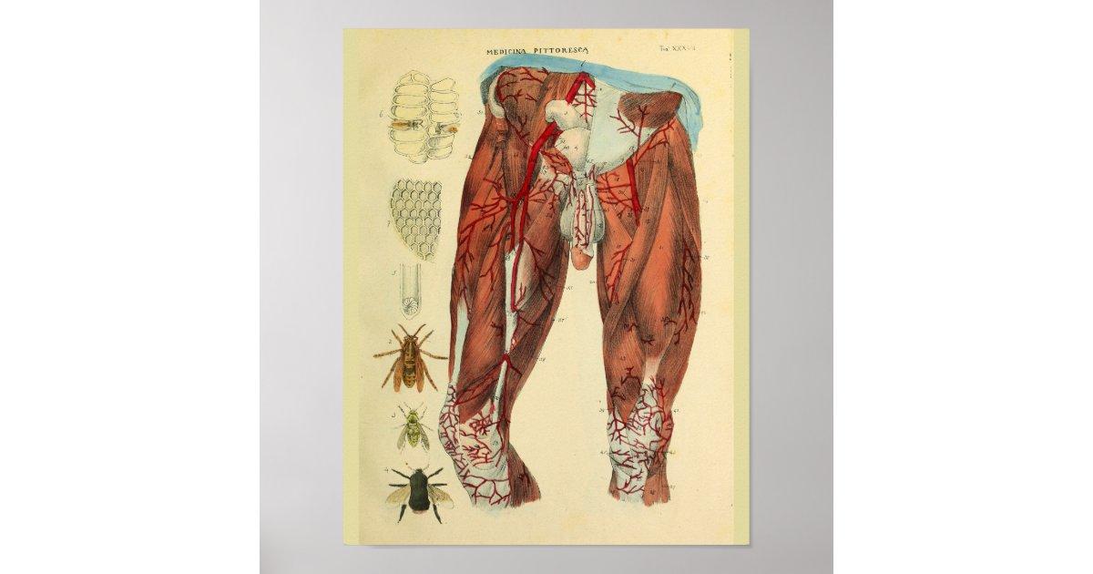 Impresión del arte de la anatomía de las abejas de | Zazzle.es