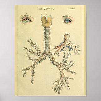 Impresión del arte de la anatomía de los ojos de