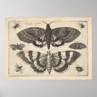 Impresión del arte de los lepidópteros de la