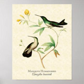 Impresión del arte del colibrí del mangle