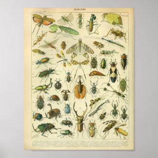 Impresión del arte del insecto del color del póster