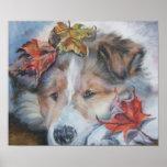 Impresión del arte del perrito de Sheltie Poster