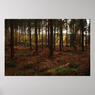 Impresión del bosque de Sherwood