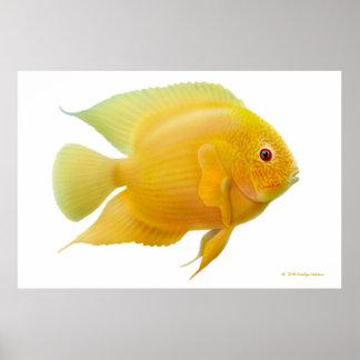 Impresión del Cichlid de Severum del oro del limón