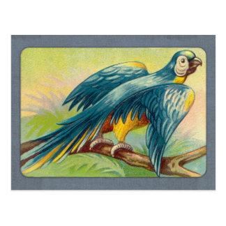 Impresión del loro del vintage postal