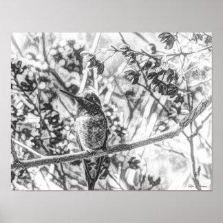 Impresión del poster de la lona del colibrí 14x11