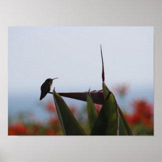 Impresión del poster de la lona del colibrí 16x12
