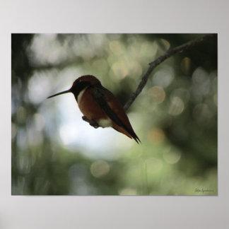 Impresión del poster del Semi-Lustre del colibrí