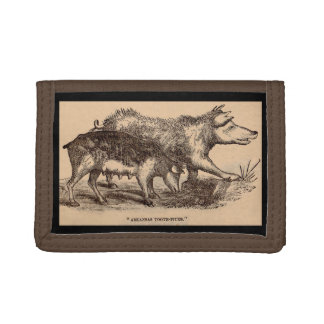 Impresión del siglo XIX de los cerdos del
