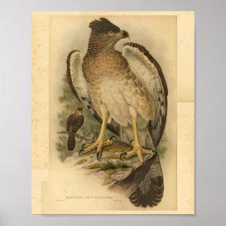 Impresión del vintage del color del pájaro de