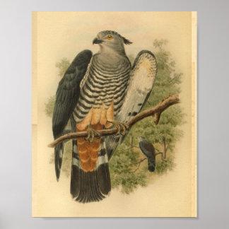 Impresión del vintage del color del pájaro del