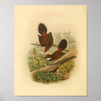 Impresión del vintage del pájaro del Flycatcher de