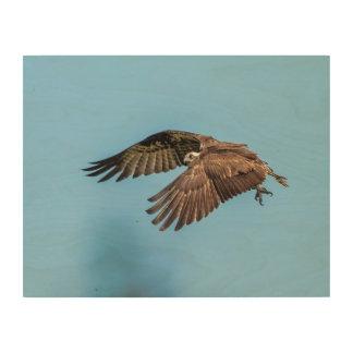 Impresión En Madera 14x11 Osprey en el parque de isla estado de la