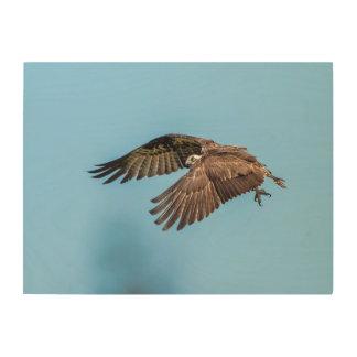 Impresión En Madera 24x18 Osprey en el parque de isla estado de la