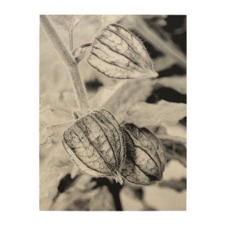 Impresión En Madera Angulata del Physalis