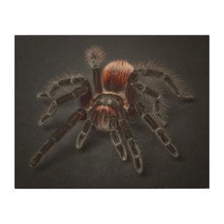 Impresión En Madera Araña melenuda del tarantula