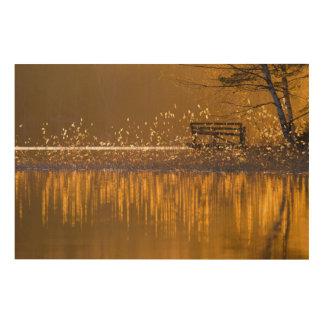 Impresión En Madera Banco solo por el lago en la luz de oro