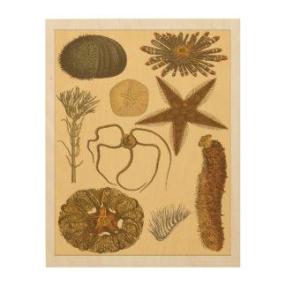 Impresión En Madera Criaturas subacuáticas del mar