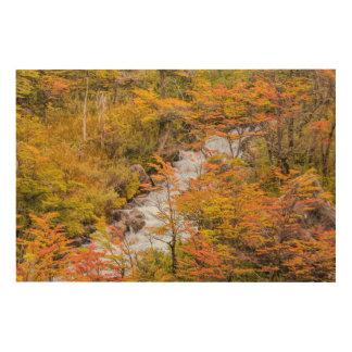 Impresión En Madera Escena coloreada del paisaje del bosque, Patagonia
