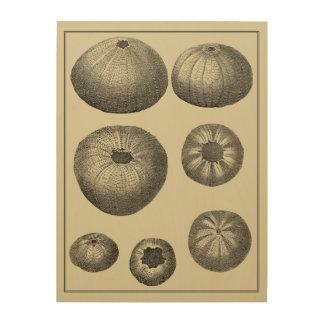 Impresión En Madera Estrellas de mar blancos y negros