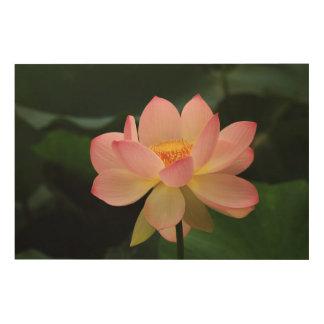Impresión En Madera Flor de Lotus tropical pacífica del rosa de jardín