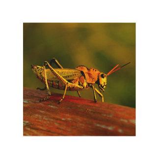 Impresión En Madera Foto de madera del saltamontes