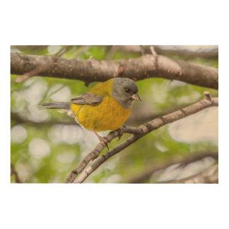Impresión En Madera Pájaro amarillo