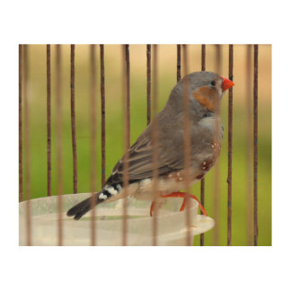 Impresión En Madera Pájaro del pinzón de cebra en jaula