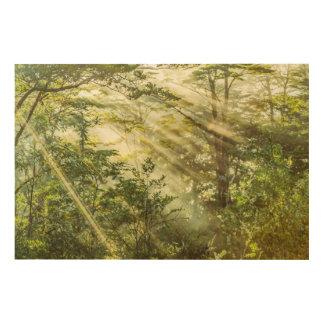Impresión En Madera Parque de Queulat, paisaje del bosque de la