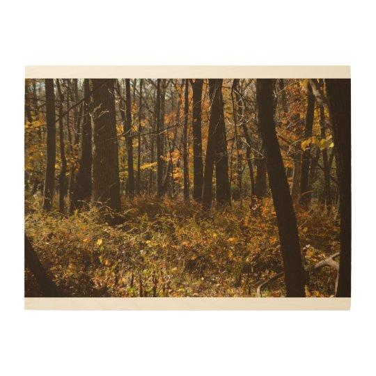 Impresión En Madera Paseo en las maderas