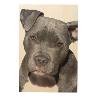 Impresión En Madera Pitbull Terrier americano