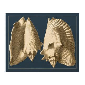 Impresión En Madera Seashells de la concha de la sepia