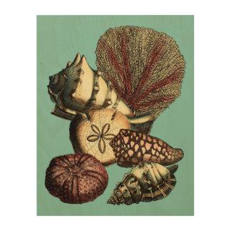 Impresión En Madera Turquesa Shell y colección del coral rojo